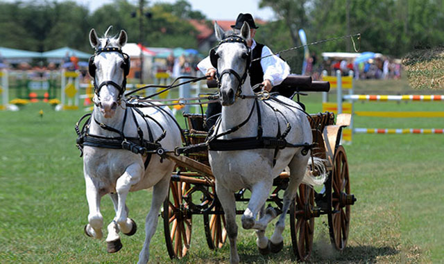 Toronto Events - Royal Agricultural Winter Fair - Horses & Carriage Races